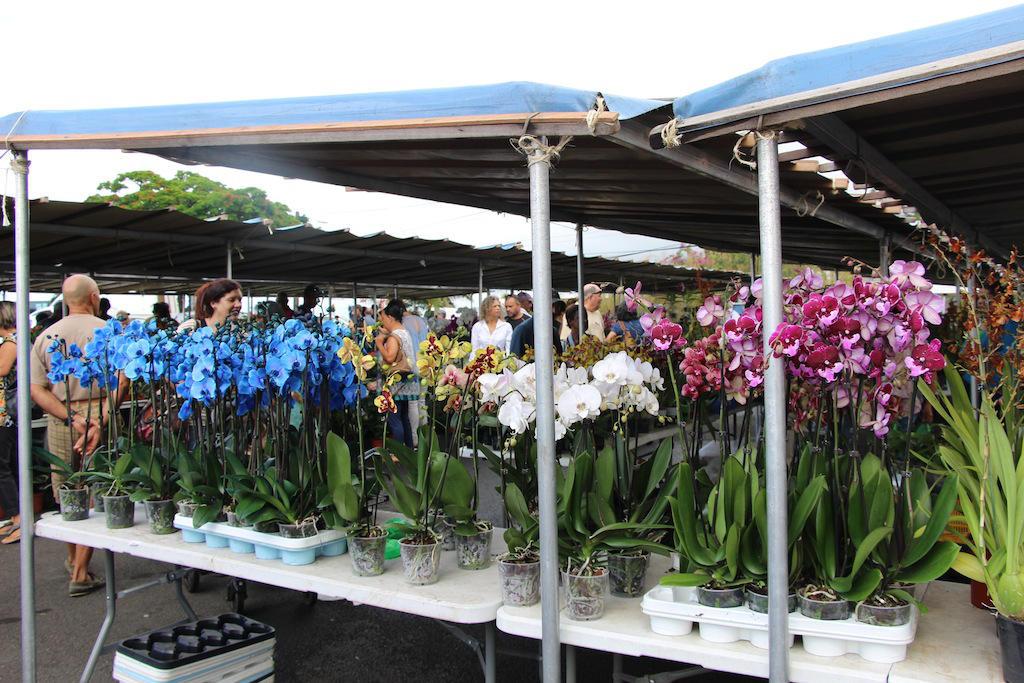Foire aux fleurs et du jardin offices de tourisme du sud for Place du jardin aux fleurs